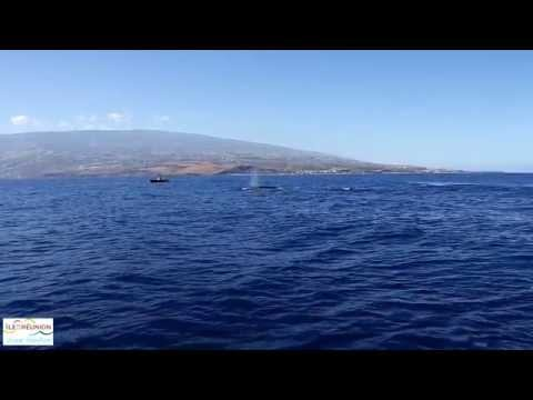 Routes des Baleines 2014