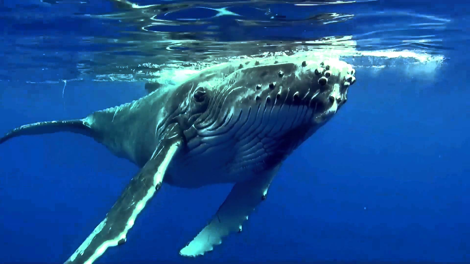 Baleines à la Réunion : Image et Son