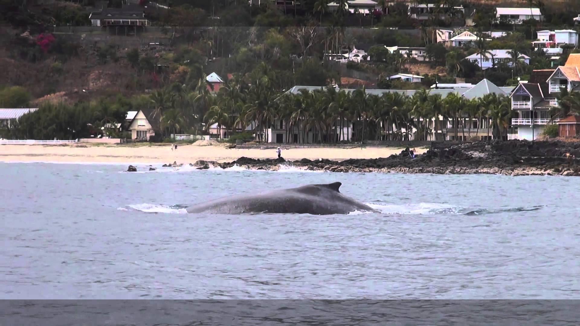 Une minute avec les baleines à la Réunion