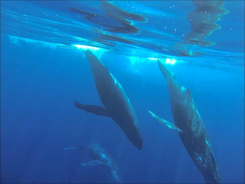 Rencontre du jour avec des dauphins et des baleines à la Réunion