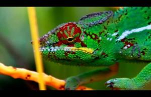 Overseas | diversité de l'île de la Réunion en vidéo