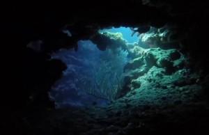 Voyage sous marin dans les fonds de l'ouest de la Réunion