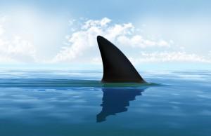 aileron-de-requin