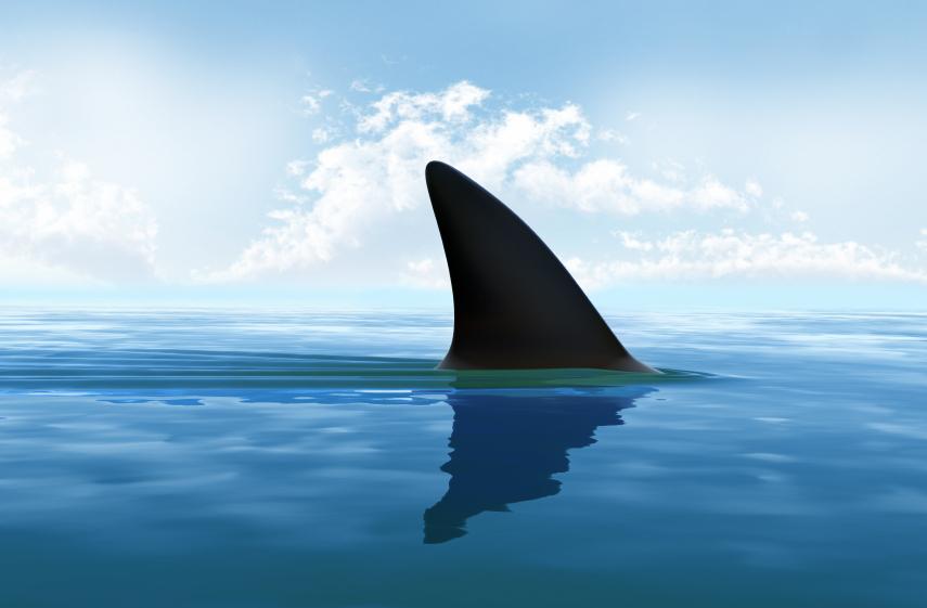 Sondage : votre avis sur le risque requin à la Réunion