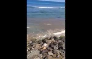Déversement des eaux usées aux Roches Noires à Saint-Gilles