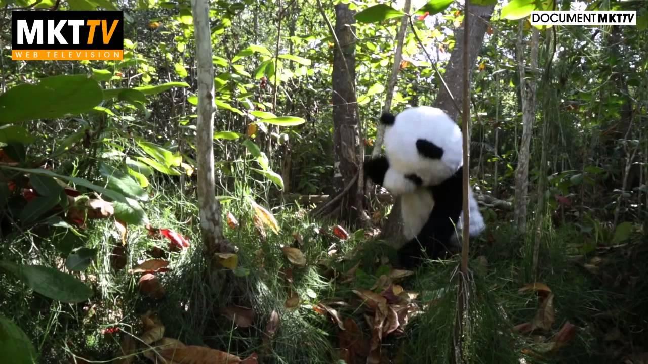 Deux Dalons ont découvert un Panda dans les hauts de la Reunion