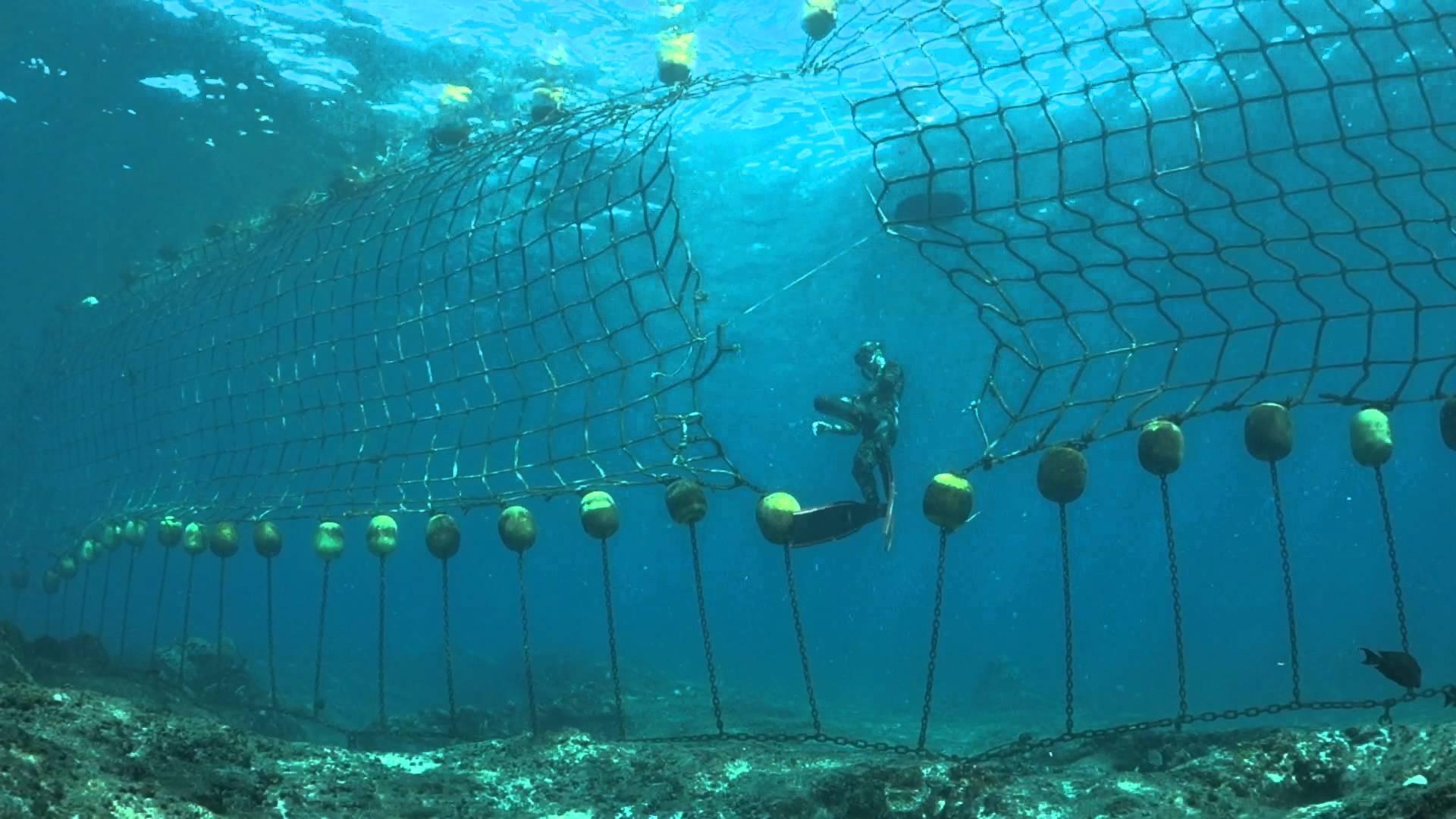 Bientôt de nouveaux filets anti-requins à boucan canot, rassurant?
