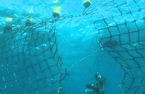attaque de requin boucan canot