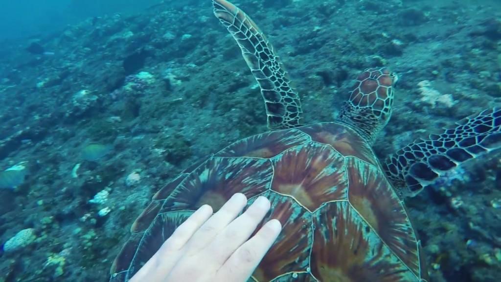 Nager avec une tortue à la Réunion
