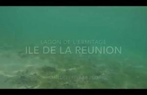 Vidéo : un requin bouledogue juvénile dans le lagon de l'Ermitage