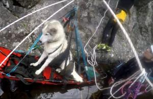 Vidéo : ils sauvent un chien dans un canyon à Cilaos