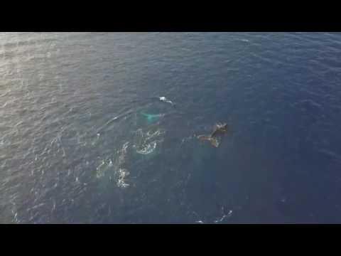 Une baleine et son baleineau au Cap La Houssaye