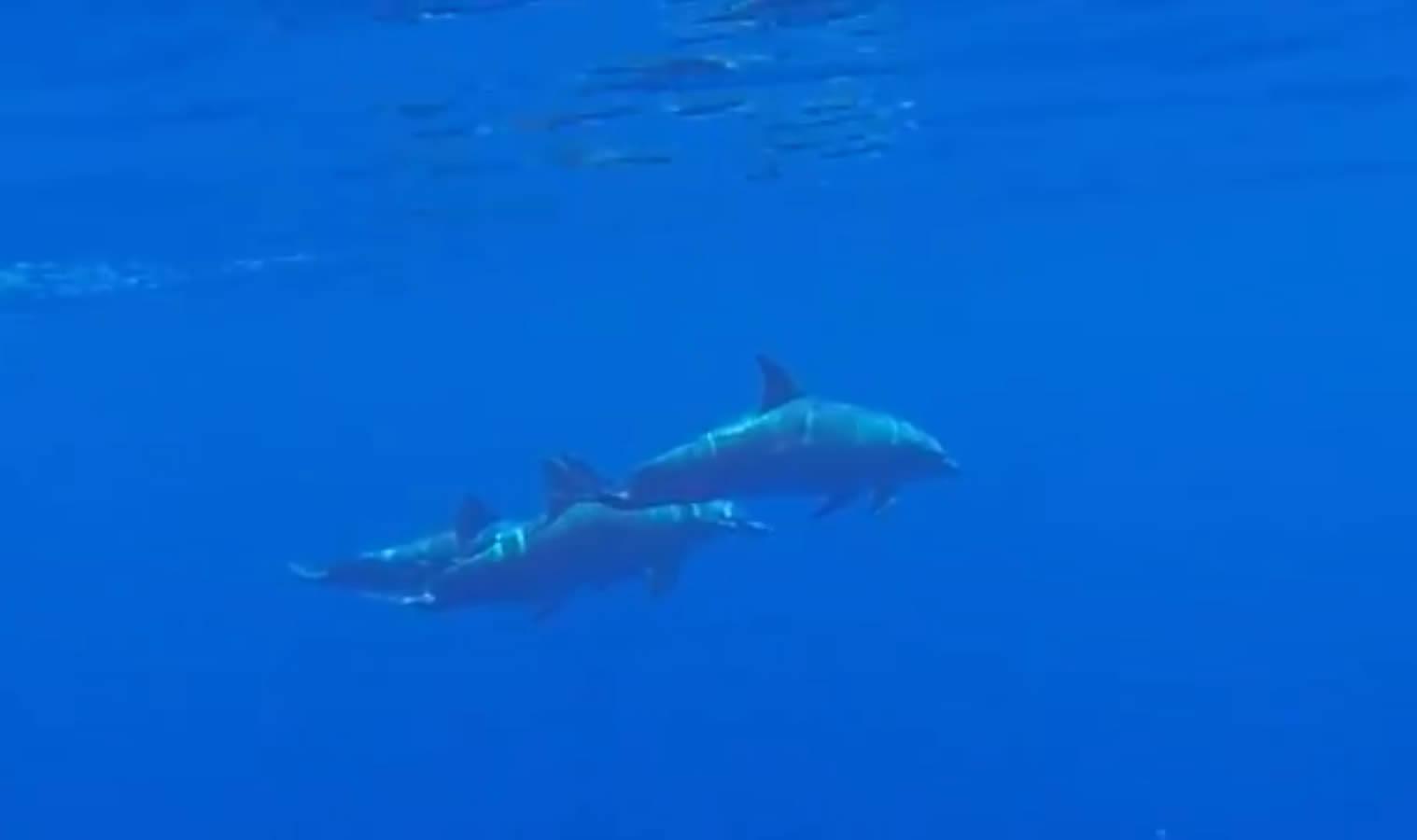 sortie bateau dauphins saint gilles réunion