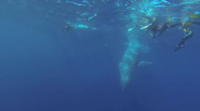 rencontre baleine reunion