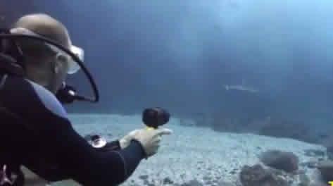 Le DEARTECK ultra-violets contre les requins