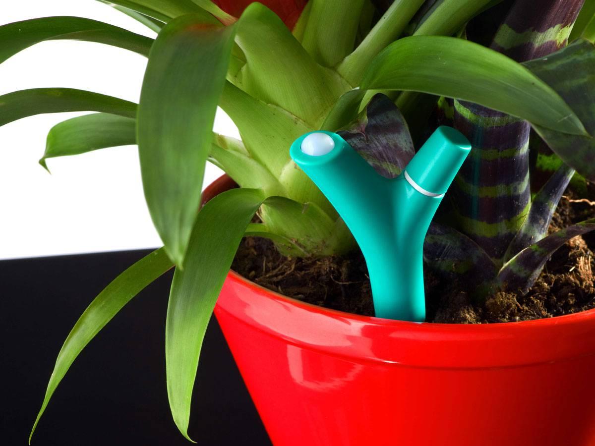 application parrot flower power pour prendre soin de ses plantes