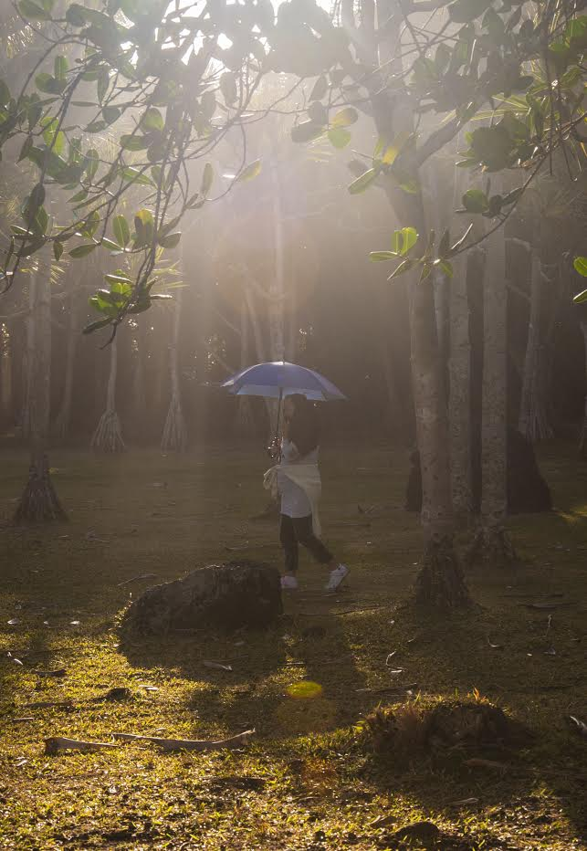 vierge parasol apercue