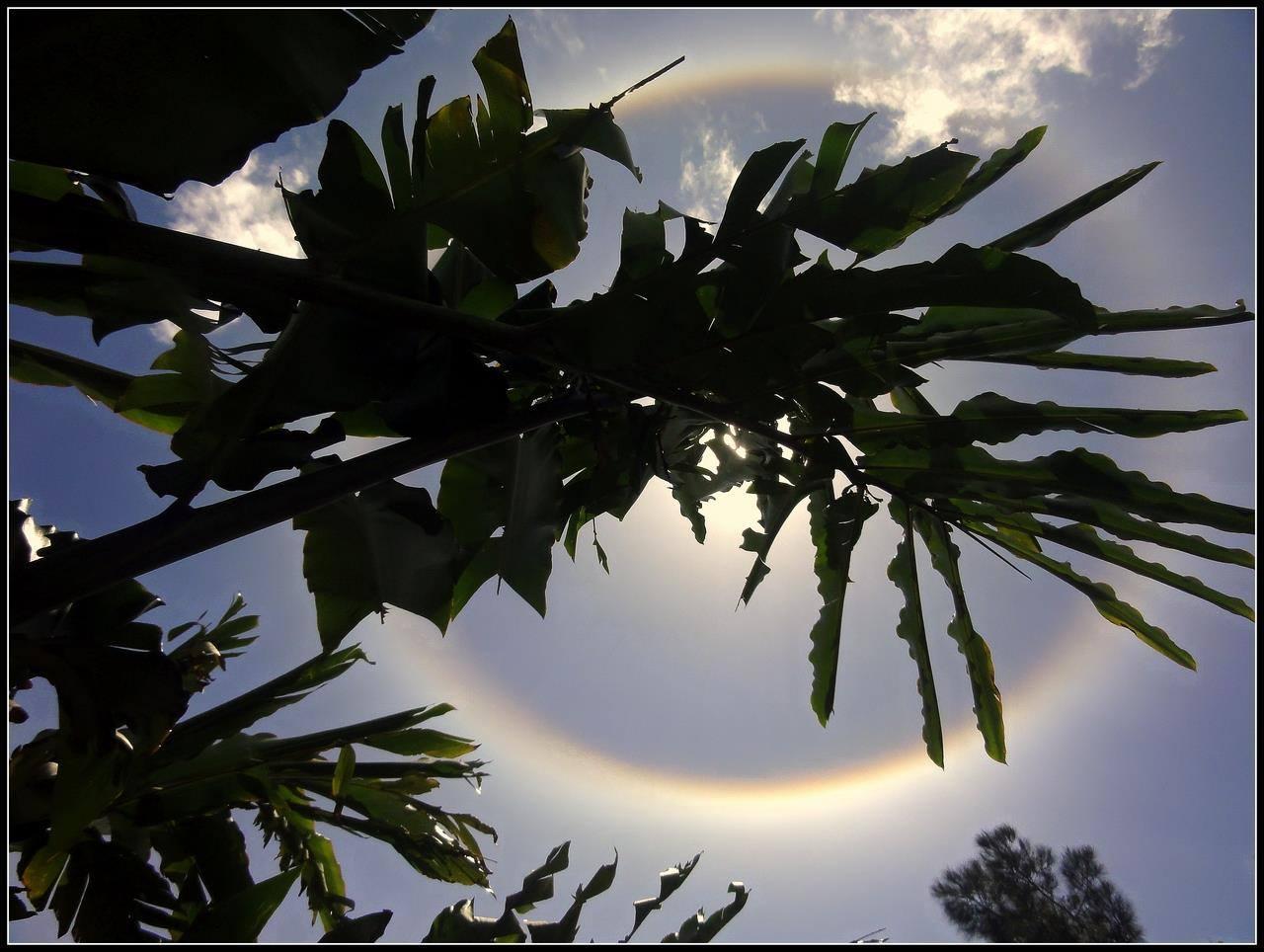 halo solaire observé à la réunion